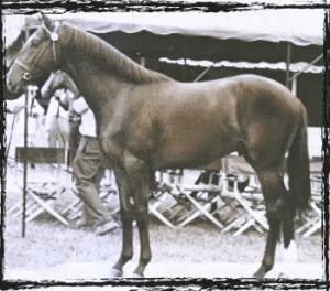 Subordinated Debt racehorse 1988
