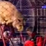 Circus lion attack calls into question the will of Peruvian authorities to enforce wildlife performance ban