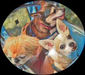 Three dogs Hurricane Laura