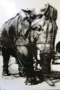 Tusko in chains.