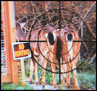 Two deer in the sight of hunter with sign