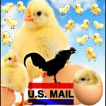 Birds in the mail:  U.S. Postal Service changes kill thousands