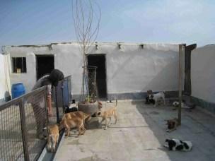 VAFA shelter near Tehran (VAFA photo)