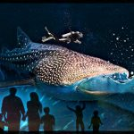 Trixie the whale shark dies young at the Georgia Aquarium