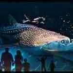 Trixie the whale shark dies young at the Georgia Aquarium