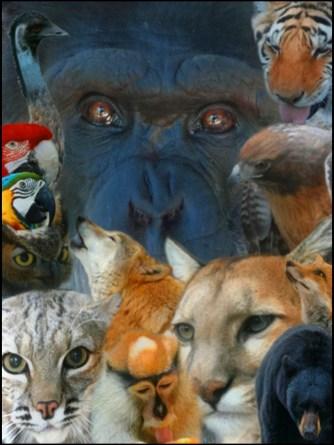 Wildlife Waystation animal portrait