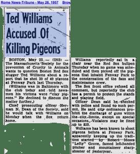 Williams pigeons