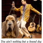 Most popular breed in U.S. ain't nothing but a hound dog