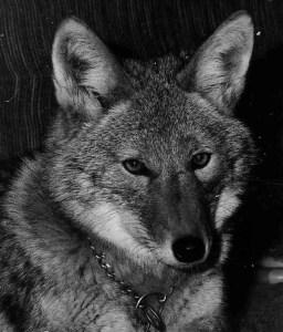 Zuni (Mona Lefebvre photo)