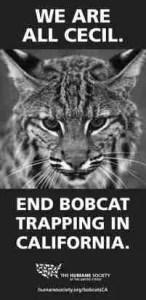 bobcats-201x413