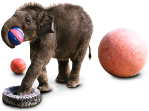 Compare this Ringling image, promoting the circus, with the one below at left, promoting the Ringling program in Sri Lanka.