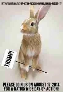 (House Rabbit Society image)