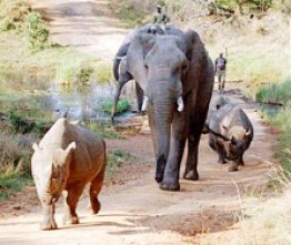 Tatenda's family and friends. Close supervision did not save the Imire animals. (Zimbabwe Conservation Task Force photo)