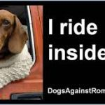 Tell Mitt Romney:  no dogs allowed on car roofs in Ohio