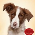 Review:  Decoding Your Dog,  edited by Debra Horwitz & John Cirbassi