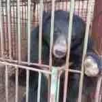 Update on Halong Bay bears