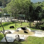 Viet officials agree to send last bile farm bears at Halong Bay to sanctuary