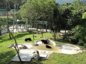 Vietnam Bear Rescue Centre.   (Animals Asia Foundation photo)