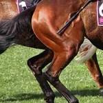 Pimlico death again raises question:   why do bettors favor beaten horses?