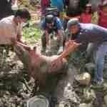 Animal Nepal's post-earthquake report