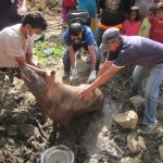 Animal Nepal's post-earthquake report