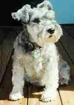 Maddie (Maddie's Fund photo)