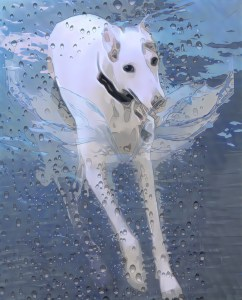 Greyhound playing in the ocean