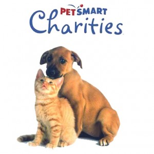 pet-smart-dog-and-cat