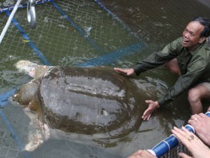 Capture team moves Cu Rua to Lao Dong Island on April 3, 2011. (Asian Turtle Program photo)