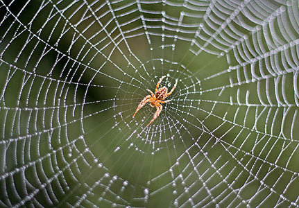 Image result for spider in a web