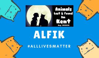 all lives matter, dog lost, cat lost, lost dog kent, lost cat kent,