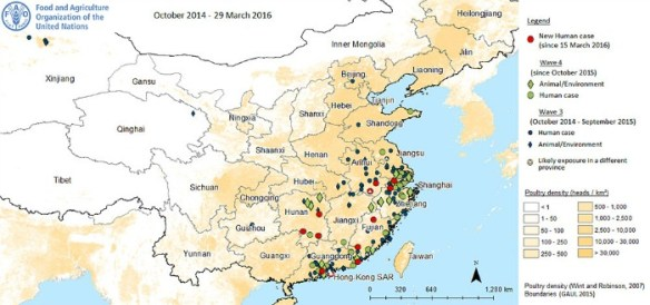 Human cases of H7N9 avian influenza virus FAO