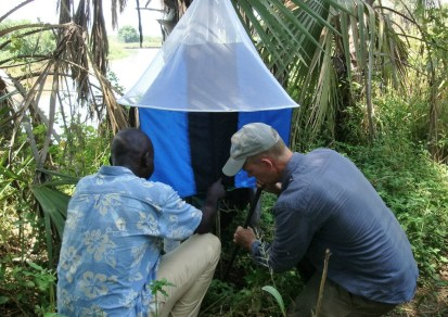 Setting up a fly trap on the banks of the River Yabus. Some tsetse species are attracted by the blue color of the trap. Charles Hoots