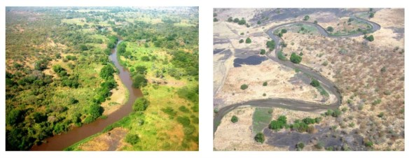 The River Yabus near Doro, South Sudan (see map above). On the left, in November at the end of the rainy season. On the right, in February, the middle of the dry season. Charles Hoots