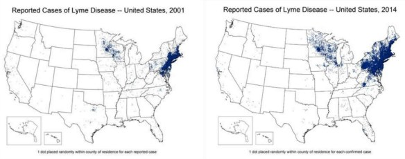 These CDC maps demonstrate clearly the overwhelming preponderance of Lyme disease cases in the northeastern and upper Midwest states of the US. The number of cases has increased in recent years much more in these two areas than elsewhere. While Lyme disease is undoubtedly present in the South, it does not appear to be expanding with any urgency, at least in people. CDC