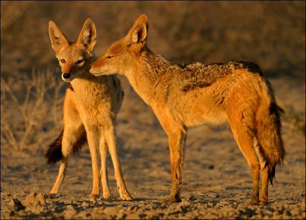 Asola Wildlife Sanctuary