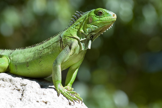 Image result for image of a reptile