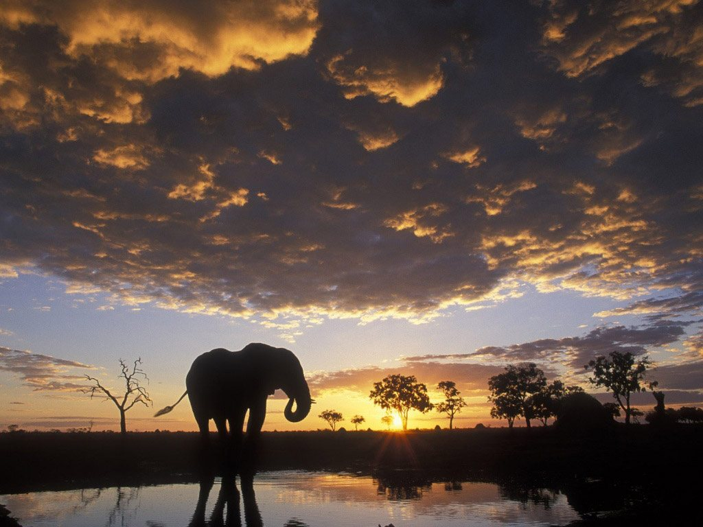 African Elephant wallpaper wallpapers