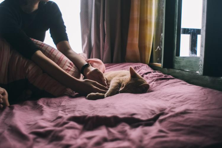 photo-of-cay-laying-on-bed-2817416