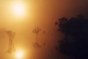 Amazon Forest un