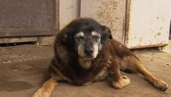 world's oldest dog dies