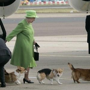 Regina a fost avertizată de boala care nu iartă animalele! De ce nu se face nimic?