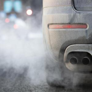 Animale ce produc mai multe emisii decât toate mașinile la un loc