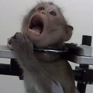 Avertisment dur: Opriți experimentele macabre pe animale!
