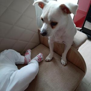 Neașteptat! Cum se comportă un câine luat de la adăpost cu un bebeluș