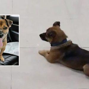 Gestul uimitor al unui câine din Wuhan s-a viralizat pe toată Planeta. Ce a făcut pentru a-și revedea stăpânul