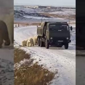 """10 """"bandiţi"""" au încercuit un camion. Ce i-a determinat pe """"hoți"""" să acţioneze la drumul mare"""