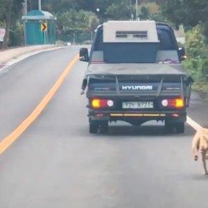 După ce i-au fost luați puii de o mașină, o cățelușă are parte de o adevărată surpriză plăcută!