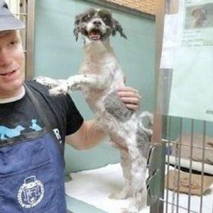 Soluția genială prin care un bărbat a reușit să crească numărul adopțiilor dintr-un centru pentru animale!