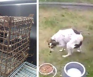 Închis într-o cușcă toată viața, un cățel se bucură pentru prima dată de libertate!